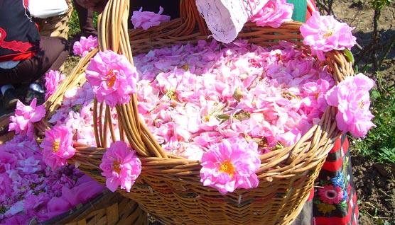 خواص و طرز تهیه ماسک عرق گلاب